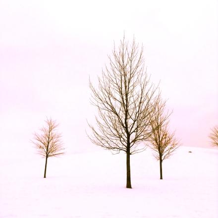 landscape white